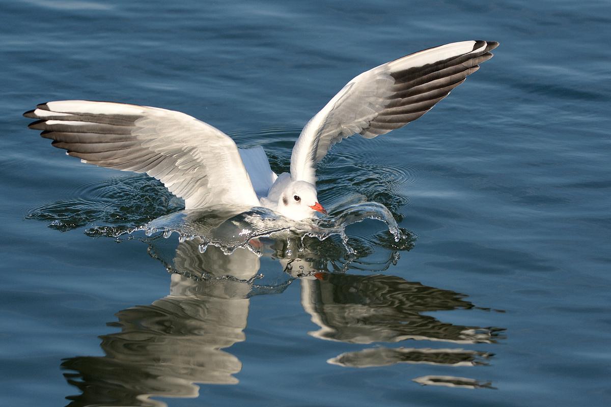 �^��m�_landende m我们|登陆海鸥
