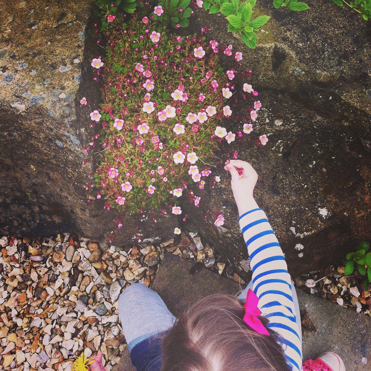 亲近大自然的孩子伸出鲜花图片