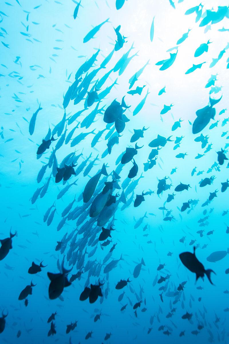 野生动物,垂直画幅,水下,马尔代夫,野外动物,鱼类,蓝色,白昼,海洋图片
