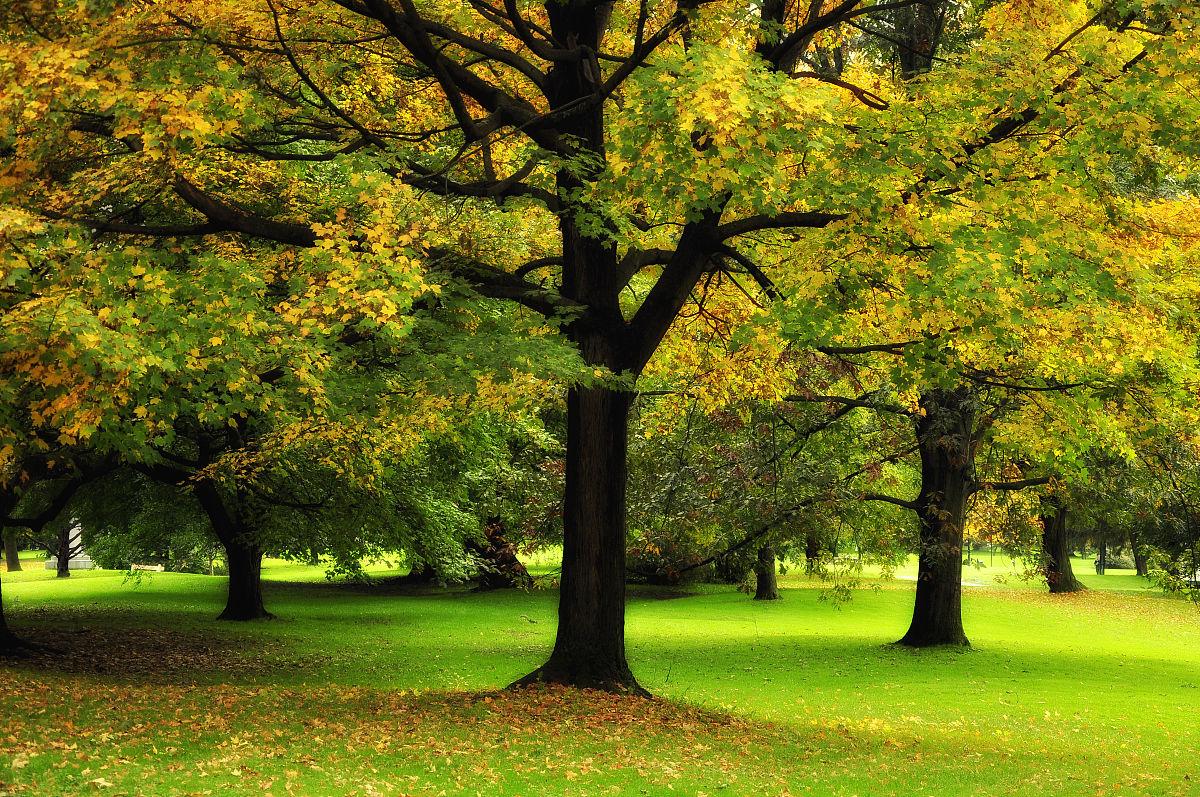 义马市招聘�y�k��d_公园里五颜六色的树