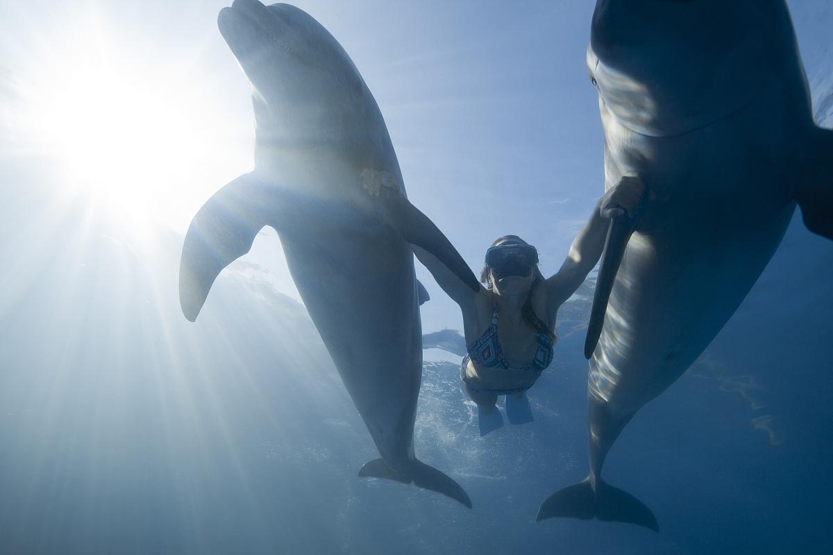 之间_年轻女孩在2只海豚之间游泳