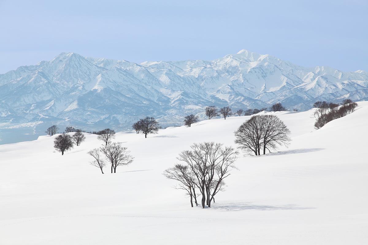 雪��/~���x+�x�&�7:d��_在雪和妙高山脉的树木,新潟州