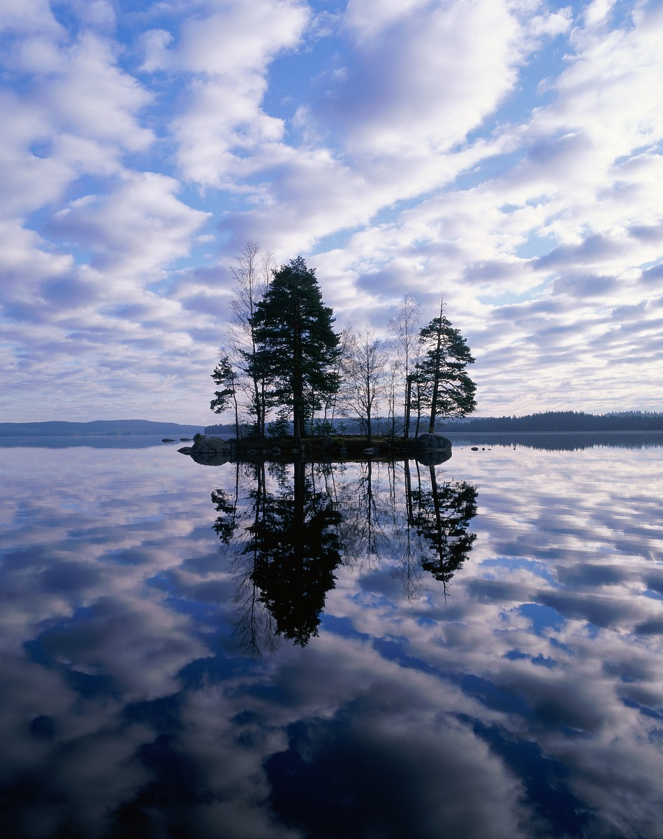 ��n;_瑞典,vastmanland,湖岛grecken,桦树和松树