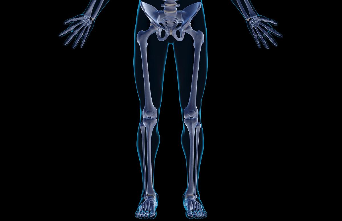 腰部骨骼固)�_人,腰部以下,正面视角,透明,皮肤,插图画法,人类骨架,彩色图片,股骨