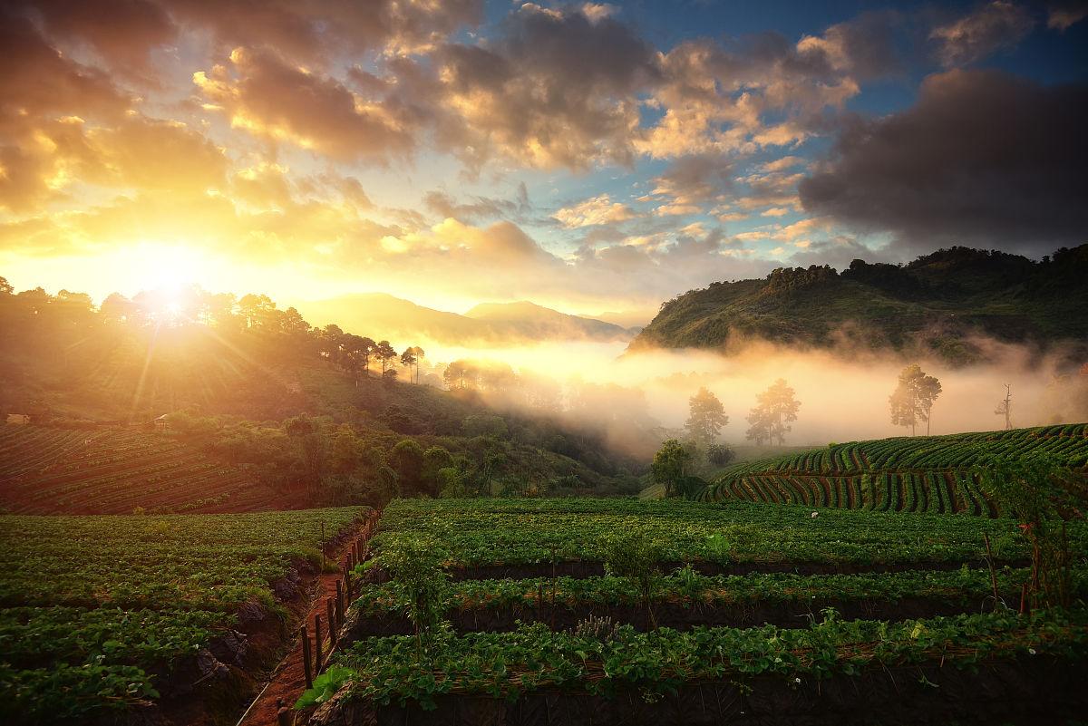 gmai_在我angkang,chaingmai省草莓场美丽的日出和薄雾,泰国