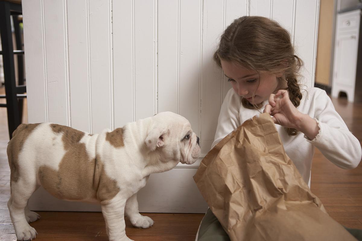 犬科的,狗,纯种犬,斗牛犬,衣服,休闲装,8岁到9岁,棕色头发,发型,麻花图片