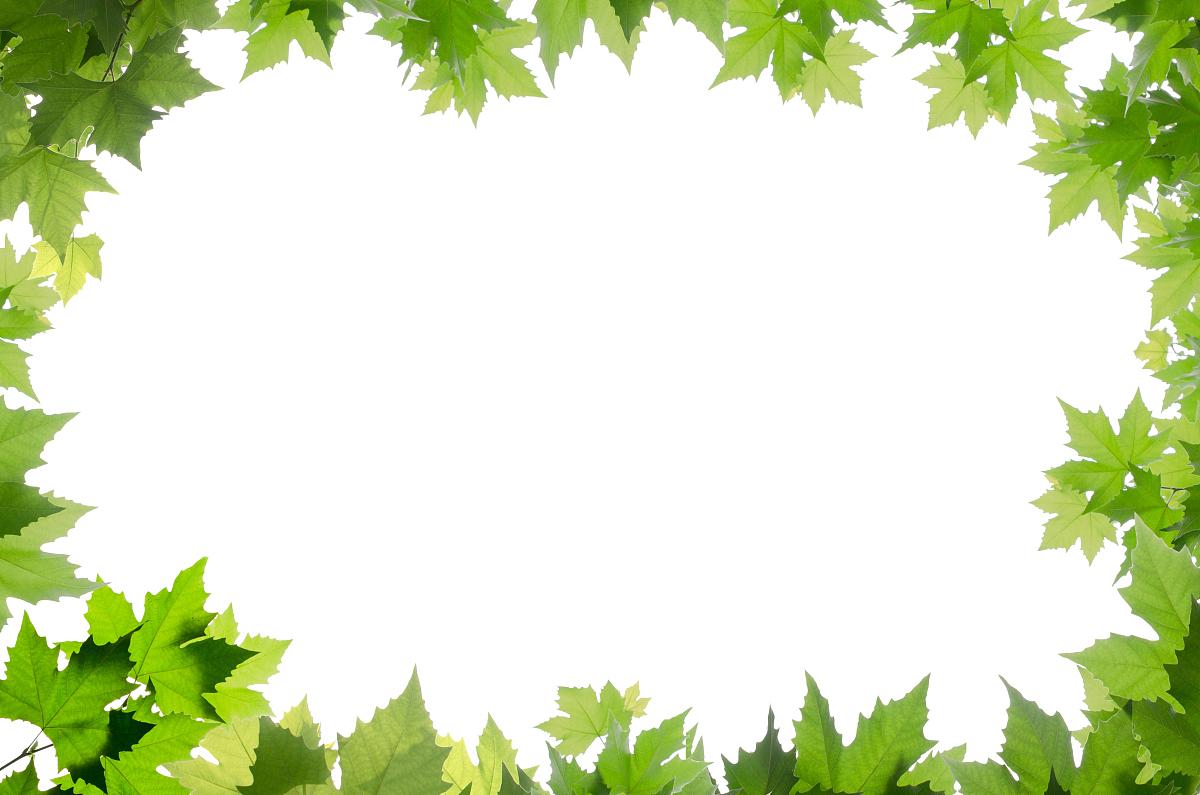 自然,环境问题,清新,环境,边框,相框,环境保护,植物志,叶子,春天图片