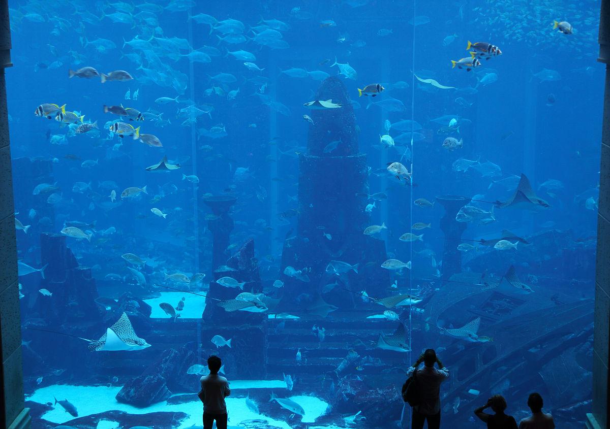 客人查看巨人水族馆,亚特兰蒂斯酒店,迪拜.图片