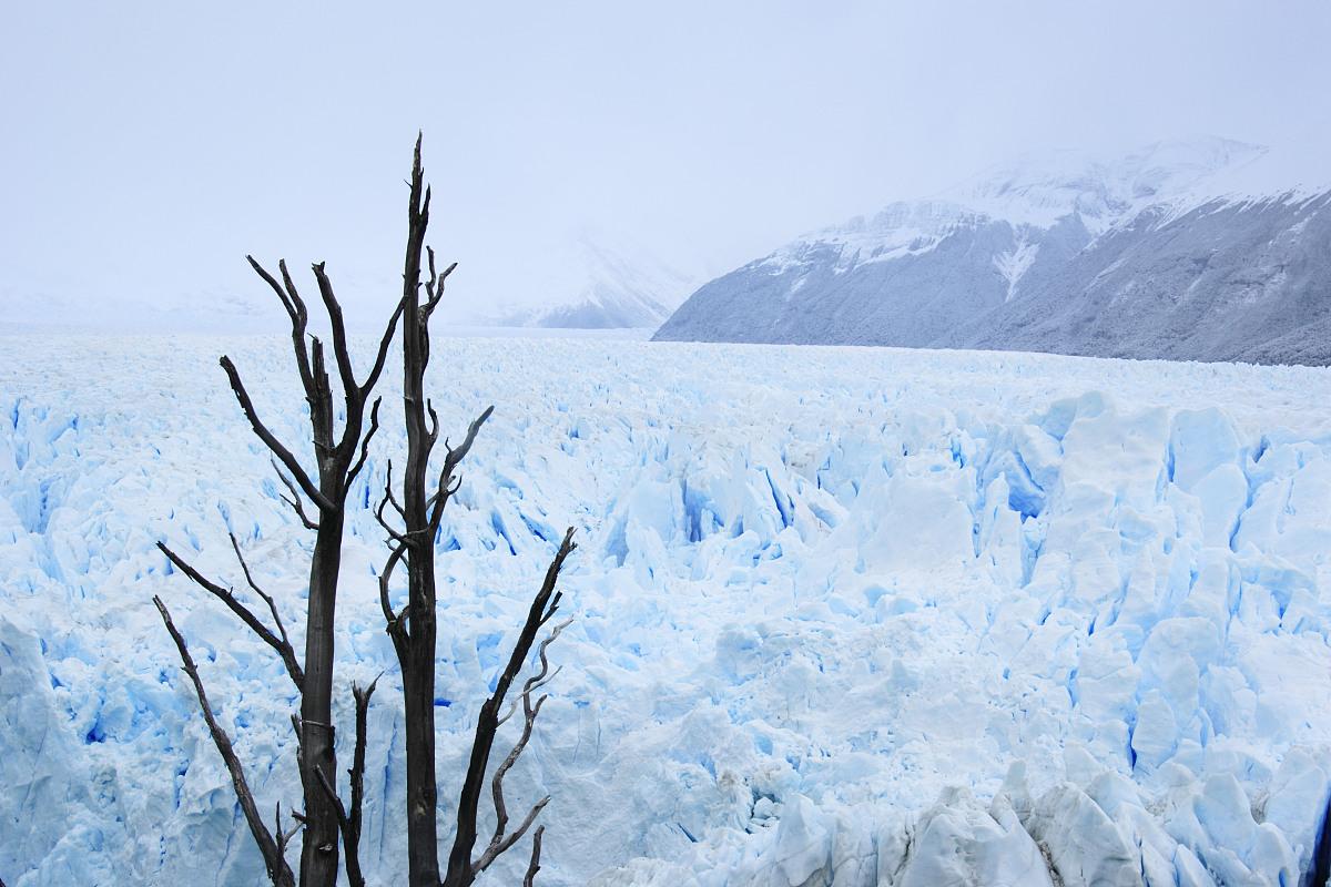 冰河,莫雷诺冰川,南美,树,全球变暖,冷,巨大的,冰,地形,国家公园,雪图片