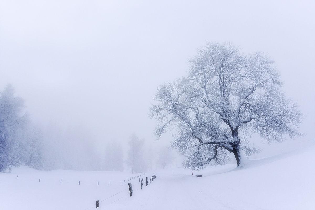 雪��/~���x+�x�&�7:d��_树上的雪雾,zugerberg,瑞士