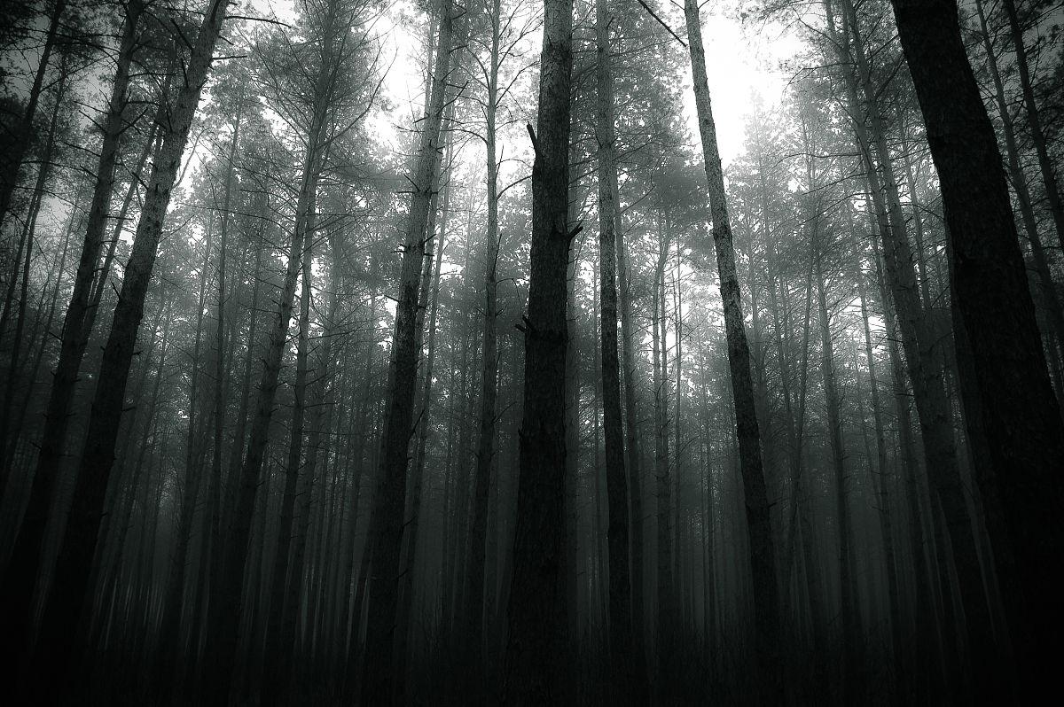 我的黑暗森林图片