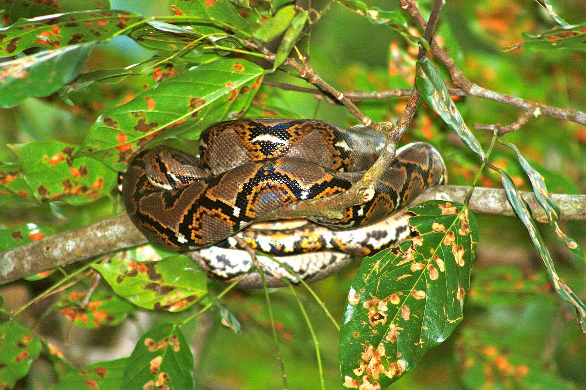 树上的python关闭
