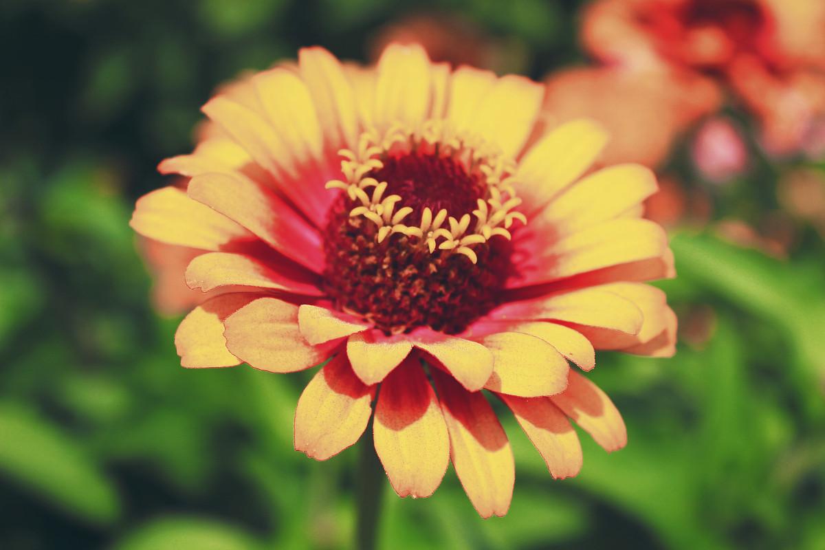 等到花也谢了_所有的花儿都去了