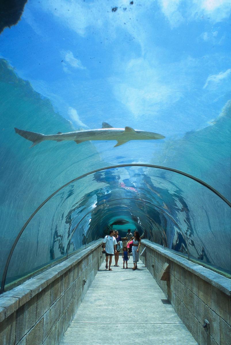 家庭穿过亚特兰蒂斯水族馆图片