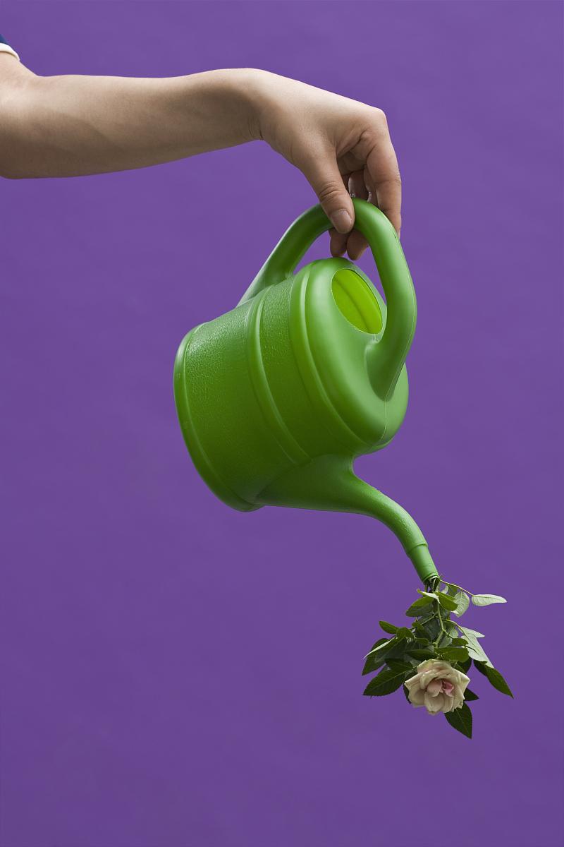 一只手拿着喷壶,一朵玫瑰花倒出壶嘴图片
