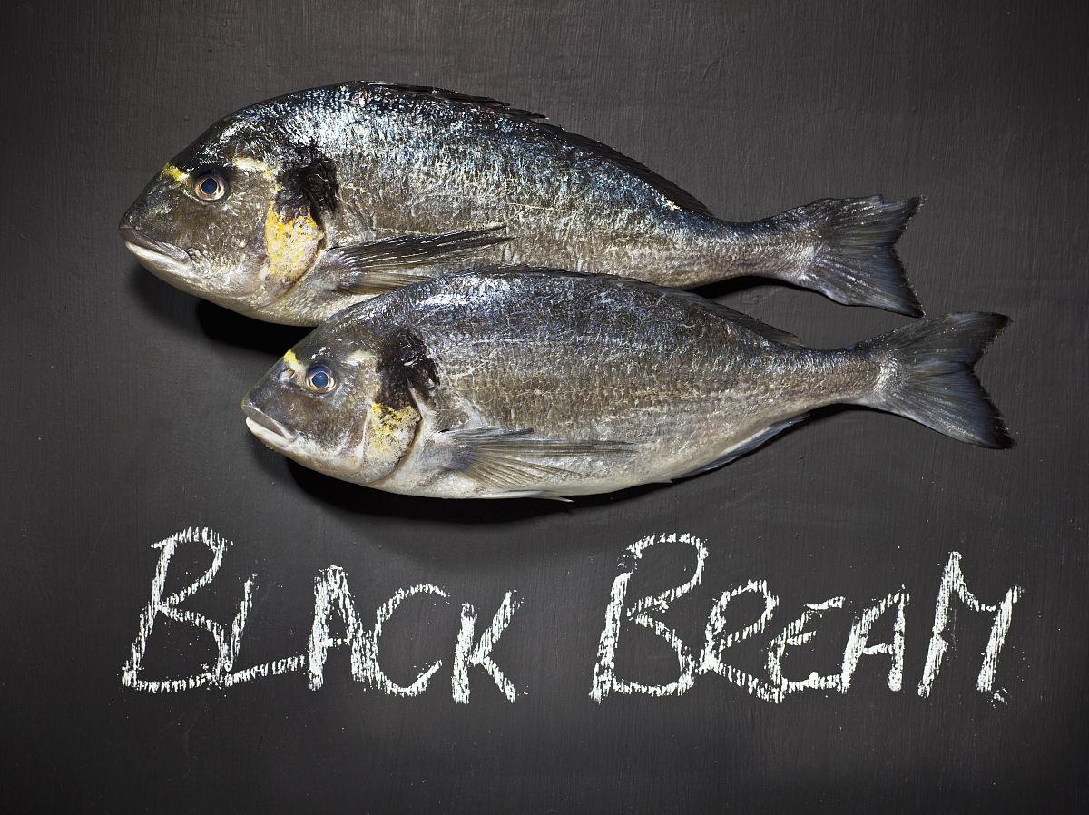 新娘鱼尹jf��_黑鲷鱼在黑板上圣新娘的温泉旅馆,桑德斯富特郡,威尔士,英国