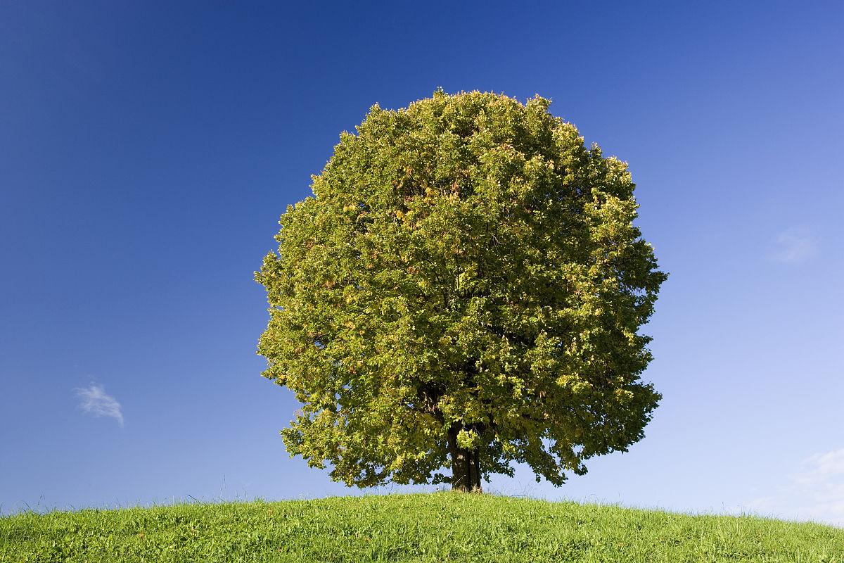 义马市招聘�y�k��d_德国,巴伐利亚,大田顶山树