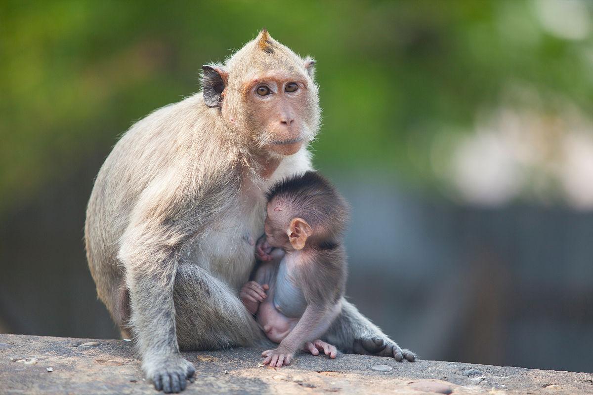 猴子为什么跟人�y.b9`�_坐在墙上的猴子和年轻人坐在一起
