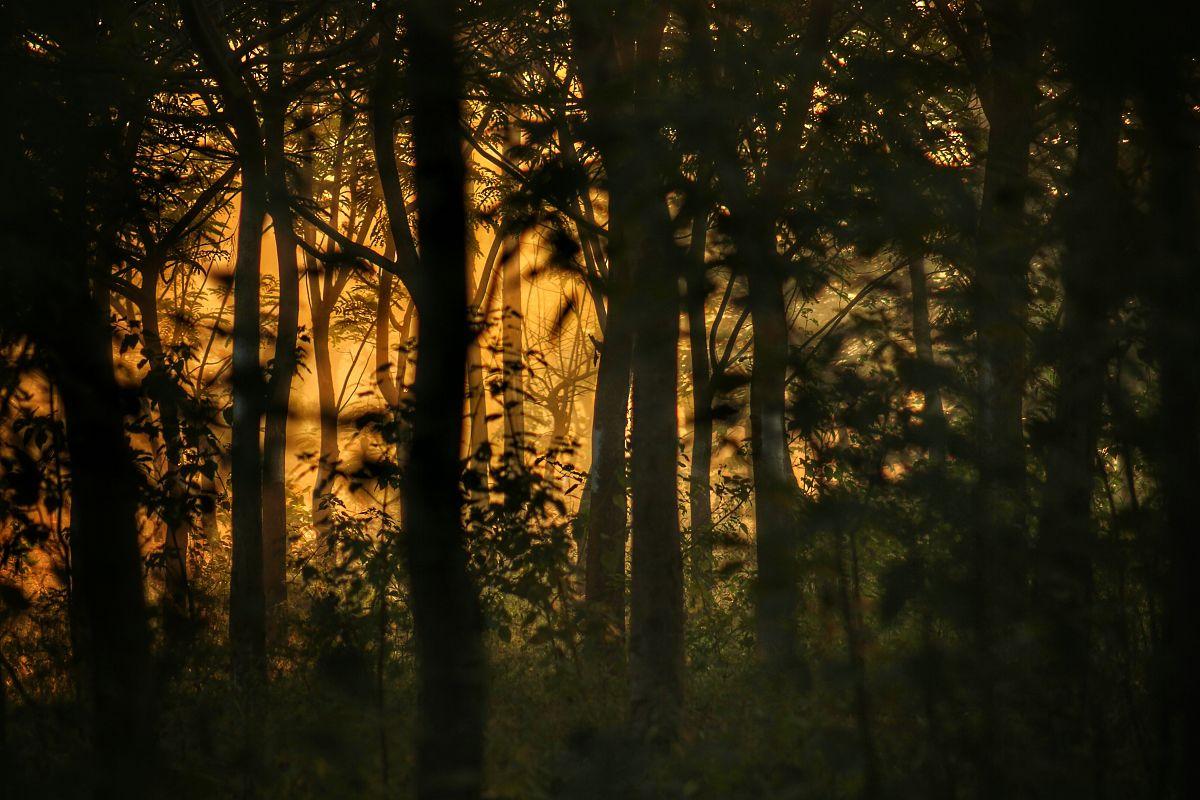 全�9/&��/9.�l#�i�_日落时森林树木的全画幅拍摄