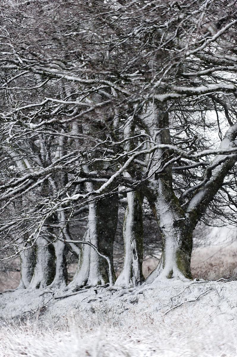 冬天的景色在迈尼德epynt荒地,powys,威尔士,英国,欧洲图片