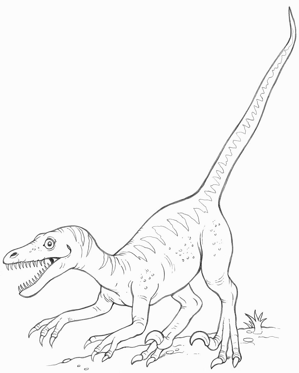 一个迅猛龙的恐龙画线图片