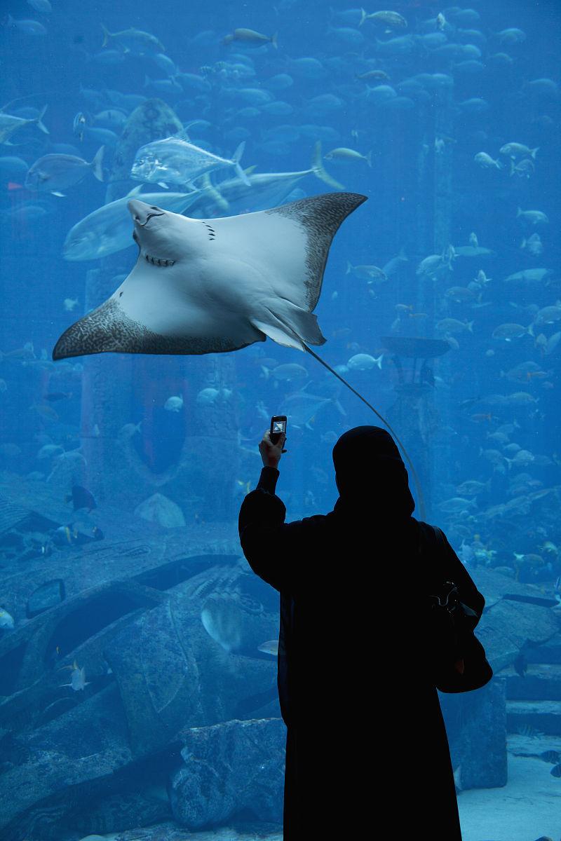 女人的拍摄的亚特兰蒂斯酒店亚特兰蒂斯水族馆的鱼图片