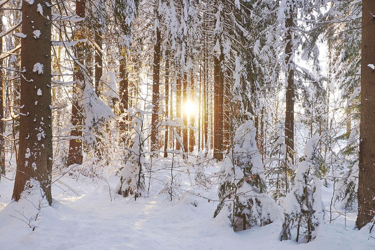 针叶树,户外,云杉,与摄影有关的场景,宁静,欧洲,自然,白昼,风景,冬天图片