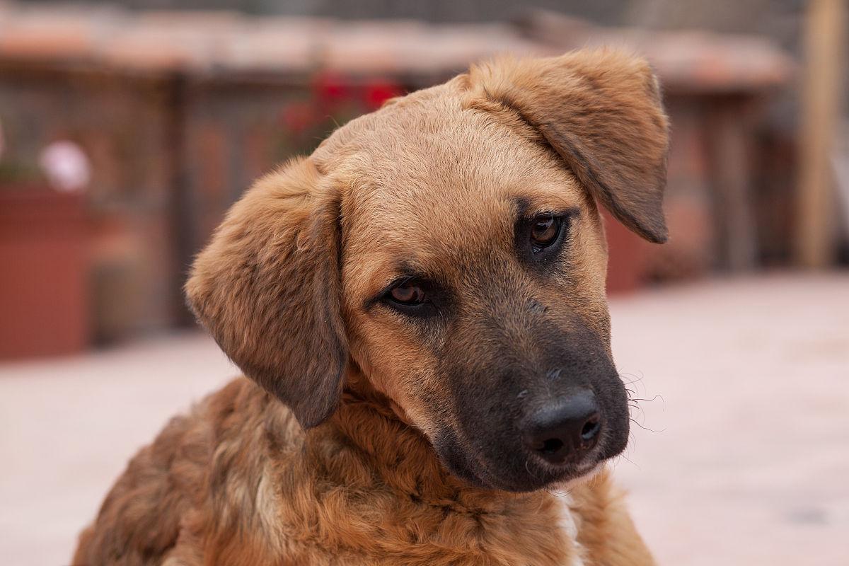人与动物乱论����y�-yol_可爱的,宠物,狗,动物,动物躯体的组成部分,人的眼睛,动物眼睛,秘鲁