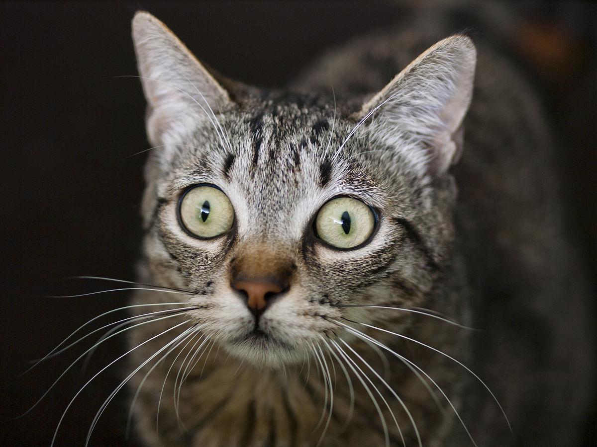 猫惊讶的表情图片