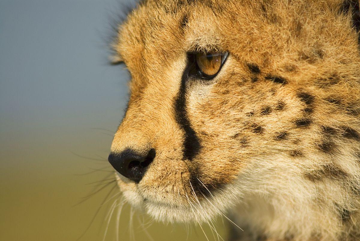 人与动物乱论����y�-yol_图像,水平画幅,腮须,野外动物,哺乳纲,马赛马拉国家保护区,无人,摄影