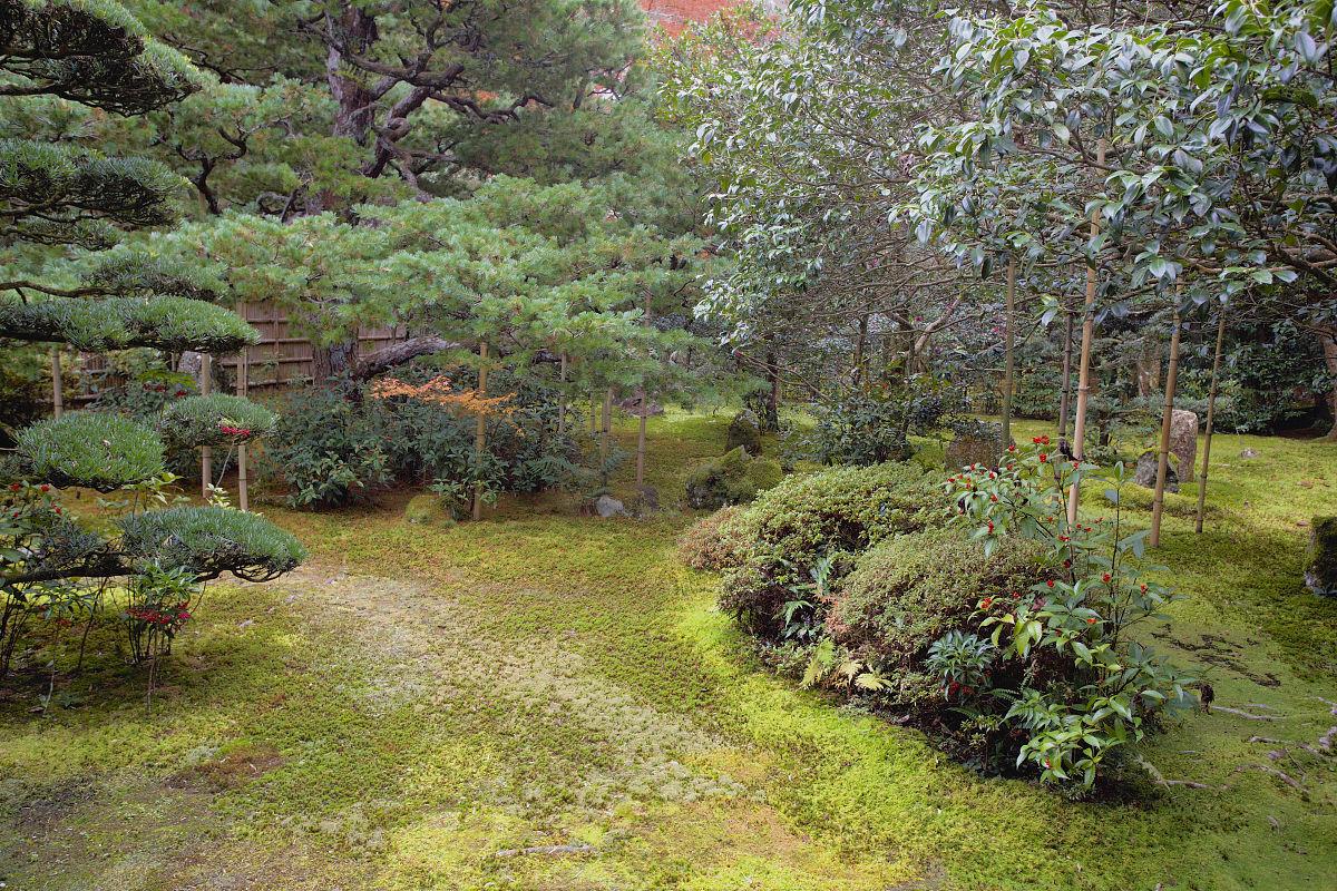 �O6�n;�Mz�_在jizo-n寺的苔藓花园.