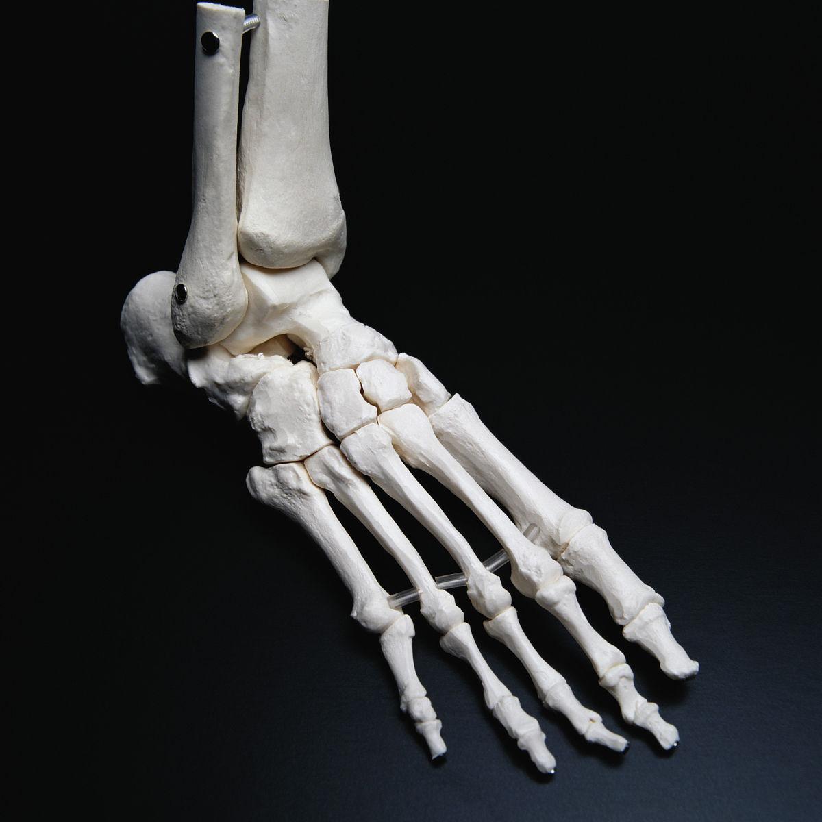 腰部骨骼固)�_彩色图片,无人,特写,足,影棚拍摄,骨骼,人类骨架,黑色,黑色背景,腰部