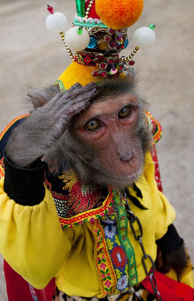 中国猴子种类_猴子穿的服装,桂林,中国