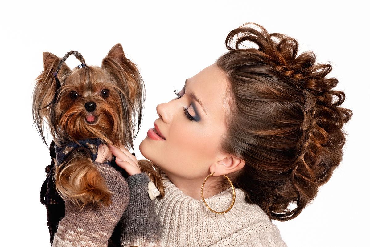 爱的,发型,棕色头发,动物,微笑,看,拿着,嬉戏的,哺乳纲,白色,狗,纯种图片