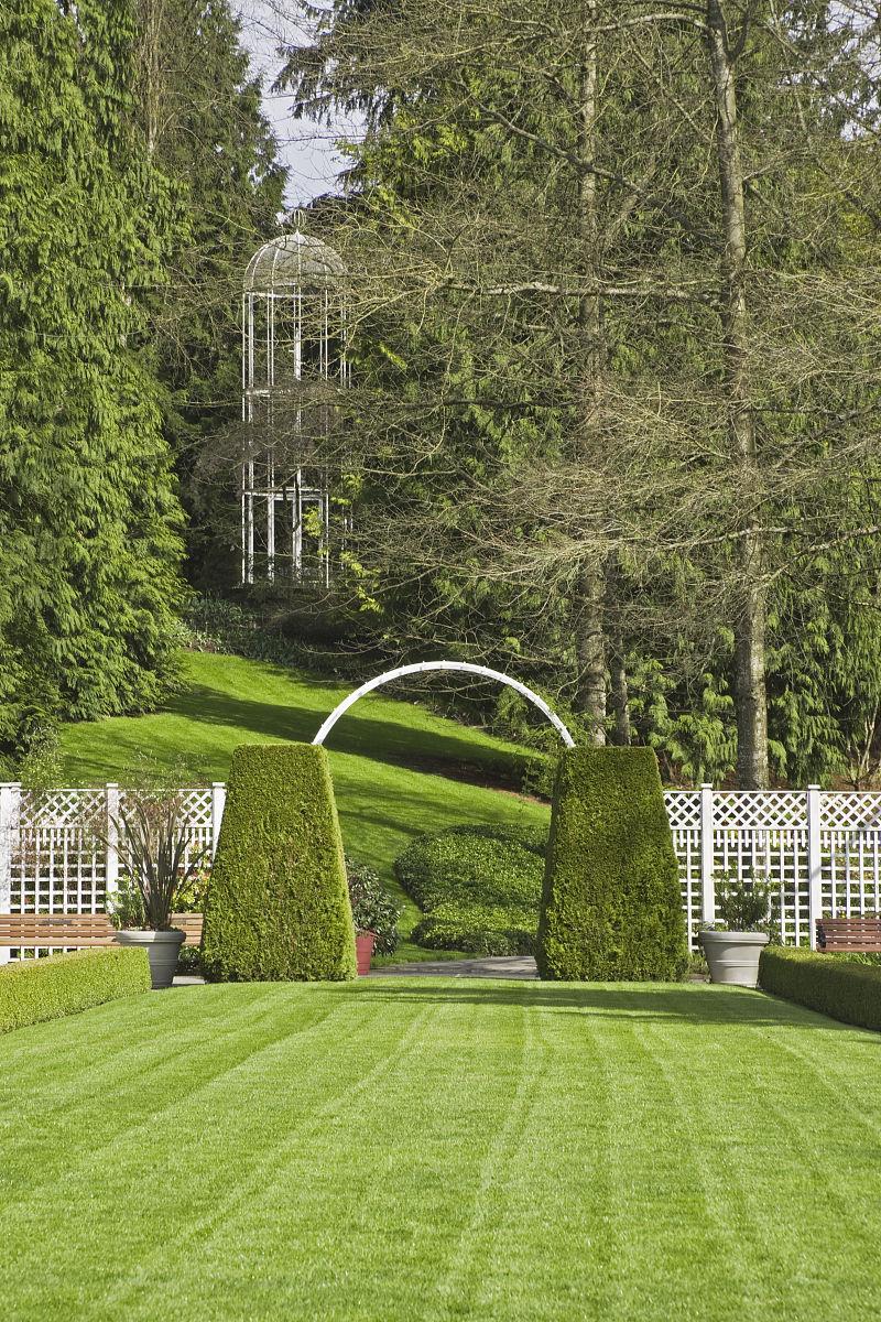 正式的草坪修剪的紫杉(红豆杉)框架的白色拱门,minter gardens,加拿大