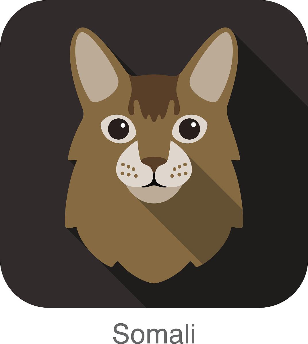 索马里猫,猫繁殖面临卡通平面图标设计图片