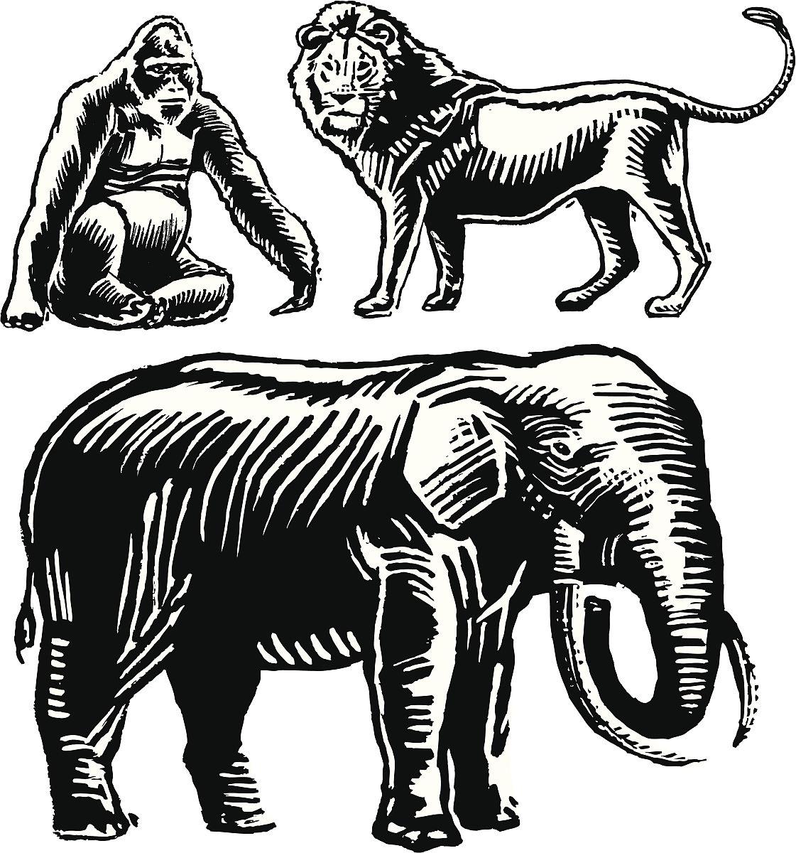 非洲动物-大象,大猩猩,狮子图片
