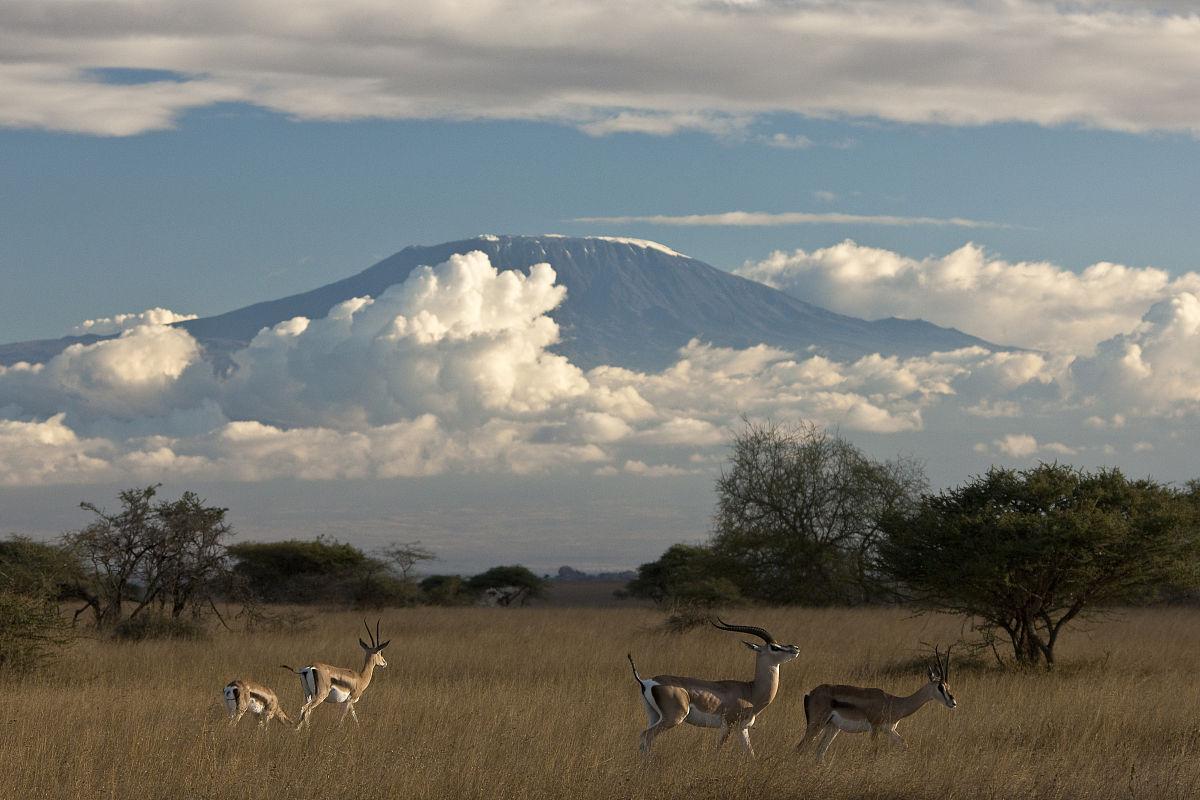 现代小�9a��am�il�..�i-9`�_瞪羚,gazella thomsoni,乞力马扎罗国家公园.