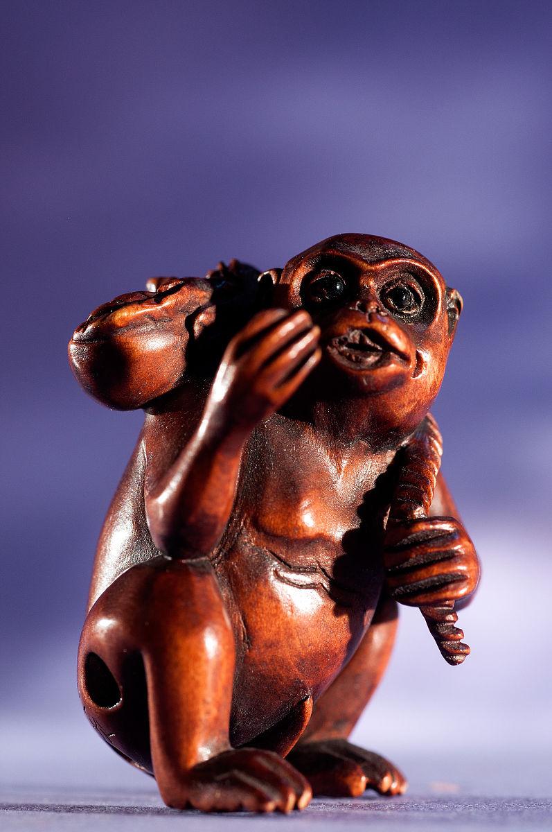 中国猴子种类_中国的猴子