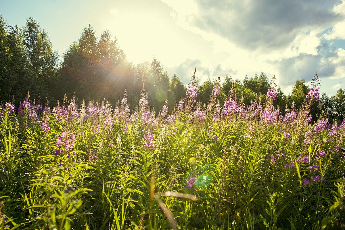 田园花卉图片