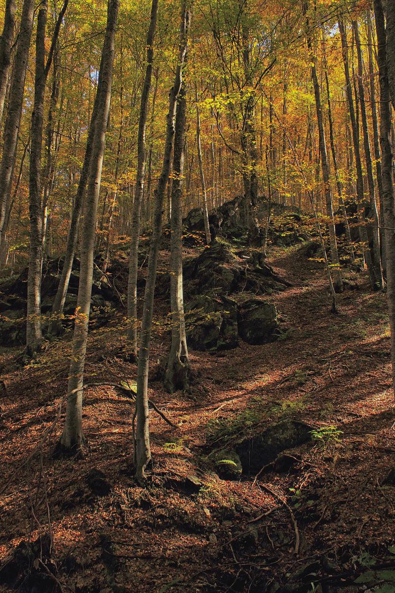 希腊,秋天,森林,地形,树,摄影,垂直画幅,彩色图片,无人,图像图片