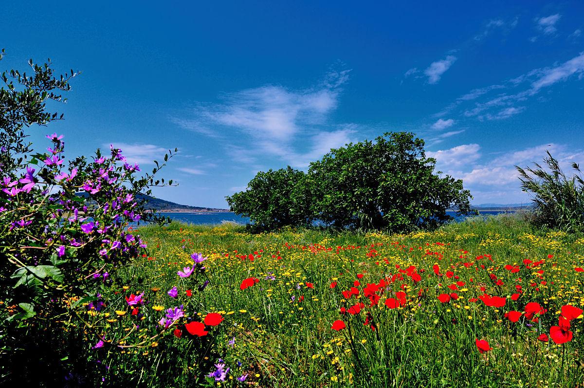 春天的图片