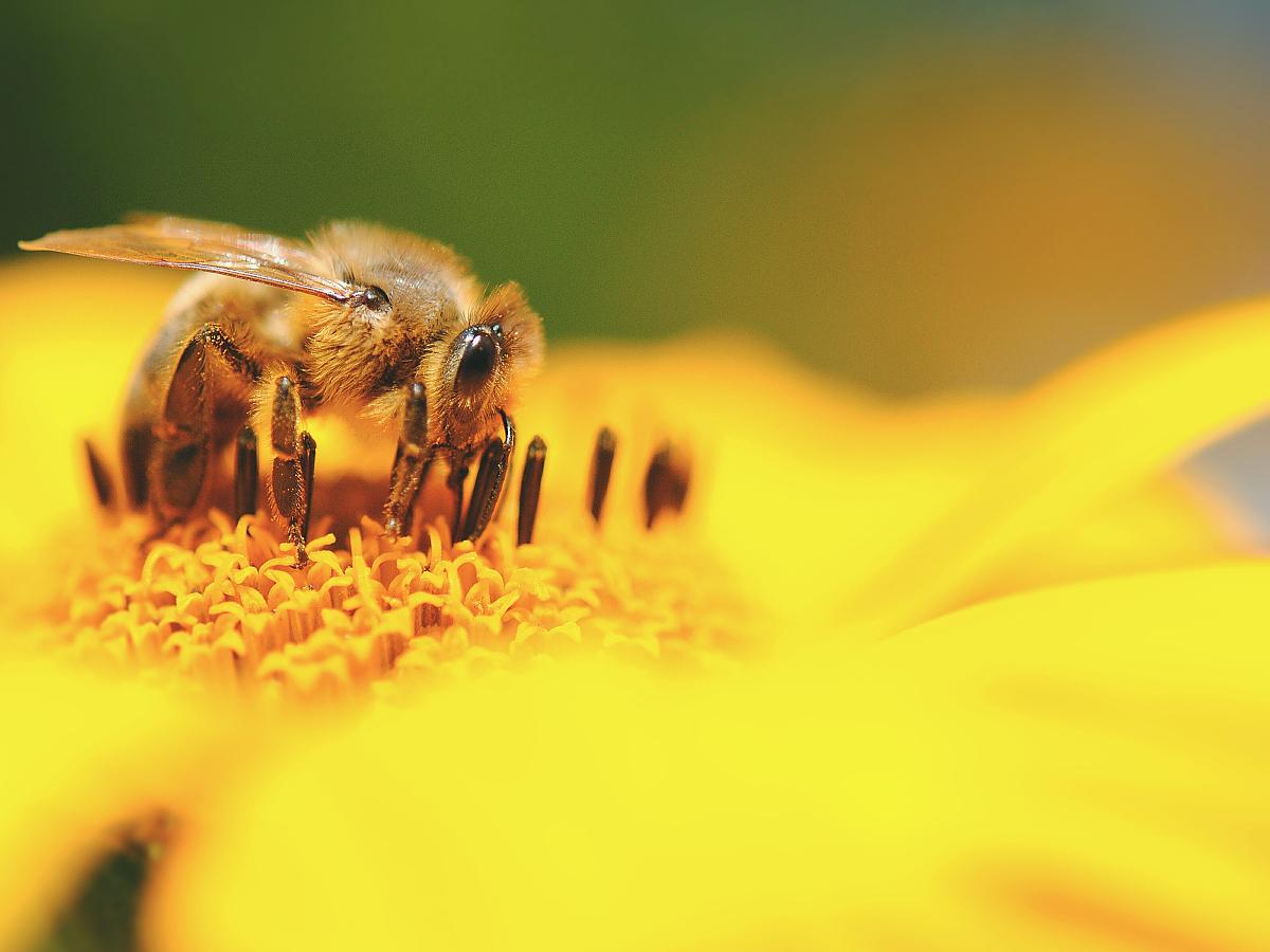 动物a动物仅一朵花一只宝宝野外花瓣动物自然美无人花蜜蜂蜗牛糖果的弱点图片