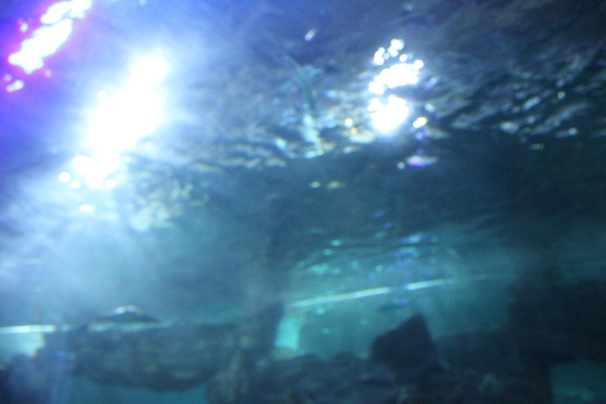 海洋,群鱼,海底,动物,鱼类,稀有,生物图片