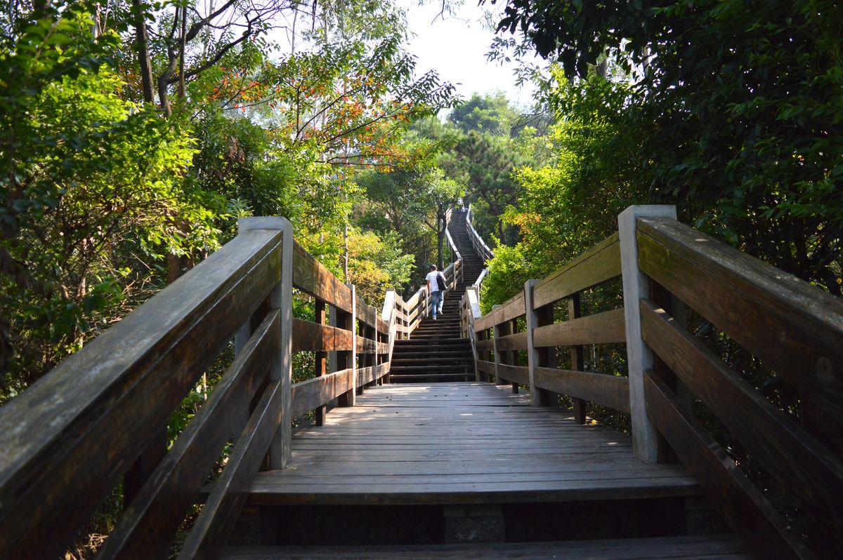 栈道,木栈道,上山道路,天梯,木板路,道路,园林道路,景观园林,园林图片