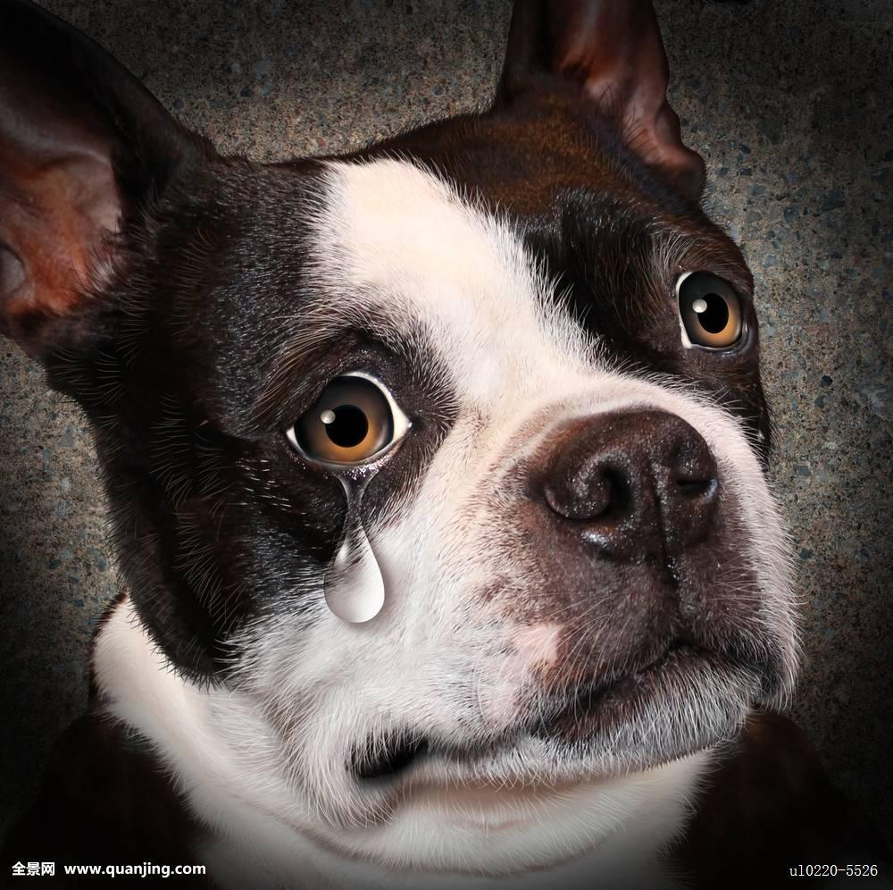 狗绝望表情分享展示 (1000x996)图片