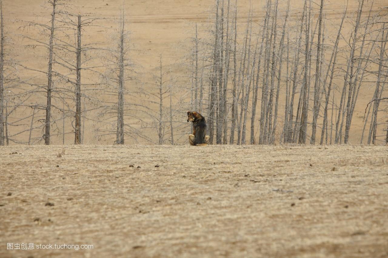 德国牧羊犬,秃子,自然,秃,完整,牧羊,秃头,一个,隐居,旅行,白昼,孤独图片