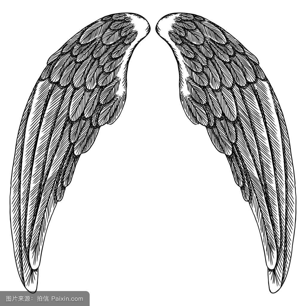纹章,剪贴画,刻,仙女,打开,设置,一对,哥特式,素描,鹰,羽毛,插图,纹身图片