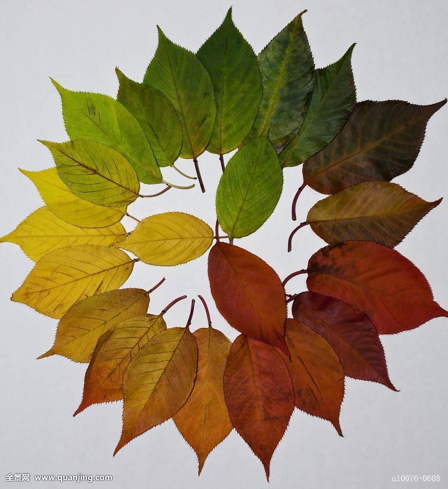 秋天树叶是什么样孑的图片