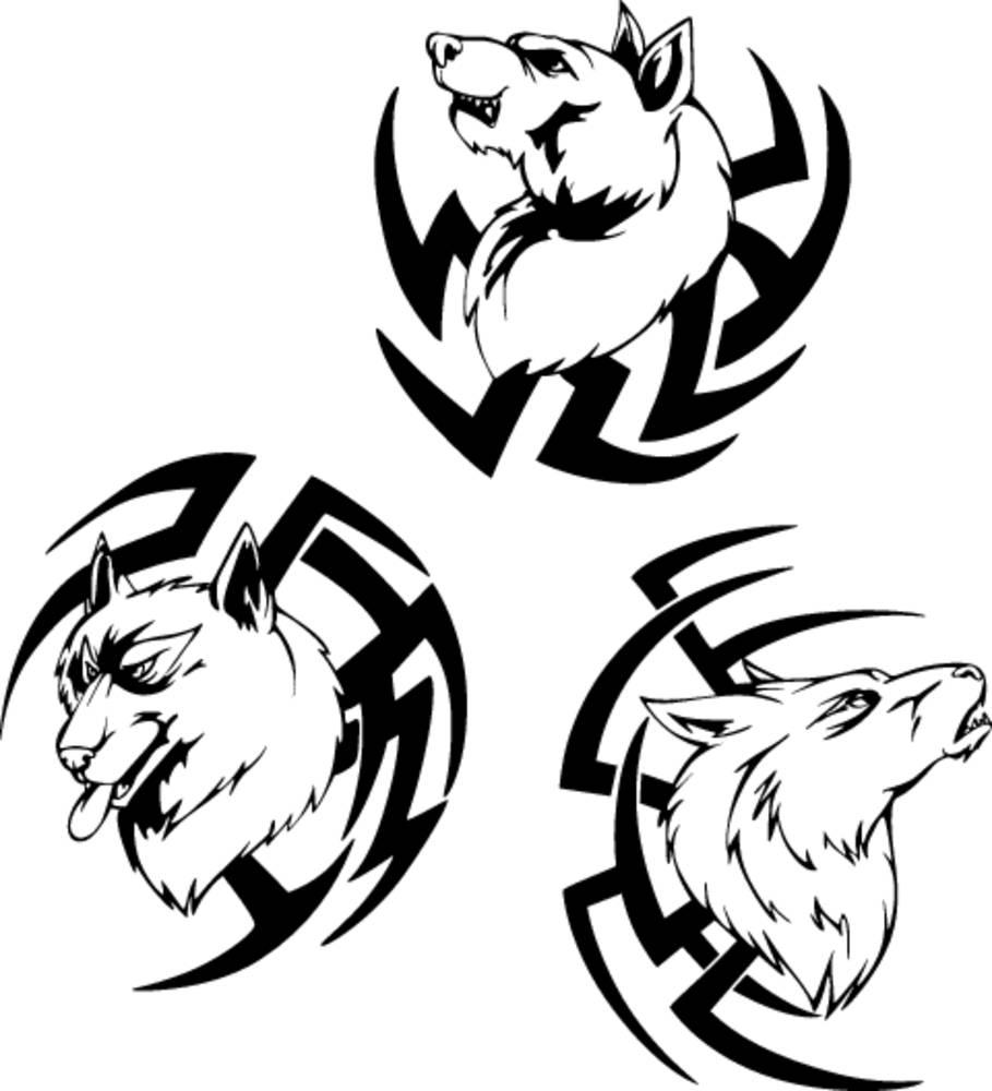 食肉动物,狼,头部,纹身图片